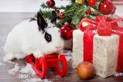 Studio de blanc de Noël de lapin photos stock