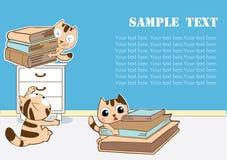 Studio dei gatti Immagine Stock