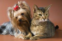 Studio del cucciolo e del gatto Fotografie Stock