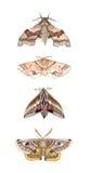 Studio del lepidottero royalty illustrazione gratis