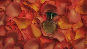 Studio di vetro del profumo delle rose dei petali archivi video