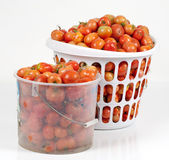 Studio die van Twee Manden van de Tomaten van het Gebied is ontsproten Royalty-vrije Stock Afbeelding