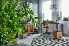 Studio flat with plants Stock Photos