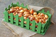 Studio image of small onion bulbs in green box Stock Photo