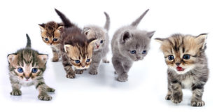 Studio isolated portrait of large group of kittens Stock Image