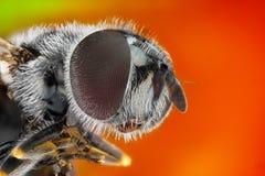 Studio marcato e dettagliato estremo della mosca Immagini Stock Libere da Diritti