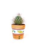 Studio ontsproten cactus Royalty-vrije Stock Fotografie