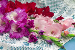 Studio photo of bright blooming gladiolus Stock Images