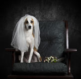Abandoned bride royalty free stock photos