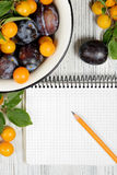Studio photography of open blank ring bound notebook surrounded by a fresh fruits plums and pencil on white wooden table. Open blank ring bound notebook Royalty Free Stock Image