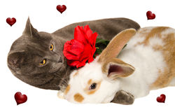 Studio portrait of cat in love with baby bunny Stock Photos