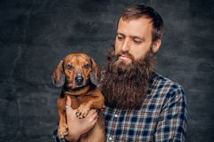 Portrait of brown badger dog and his bearded man friend. Studio portrait of cute brown badger dog and his bearded man friend Royalty Free Stock Image
