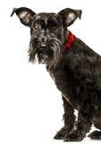 Studio portrait of dog on white background stock image