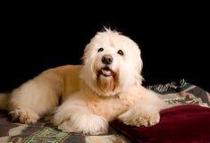 Studio portrait of mutt Stock Photo