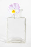 Studio Shot of Blue Colored Pansy Flower. In the phial Isolated on White Background Royalty Free Stock Image