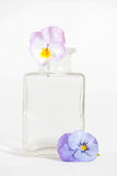 Studio Shot of Blue Colored Pansy Flower Royalty Free Stock Images