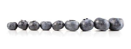 Studio shot of blueberries on white background royalty free stock image