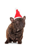 Studio shot of a bulldog with a santa hat Stock Photo