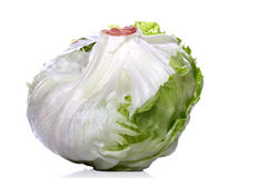 Studio shot of cabbage on white background Royalty Free Stock Photos