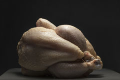 Studio shot of chicken. On the black background Royalty Free Stock Photos
