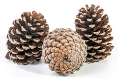 Studio Shot Cluster of Three Old  Pine Cones Stock Image