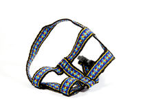 Studio Shot Of Colorful Dog Restraining Harness royalty free stock photos