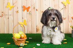 Studio shot of a cute dog in vibrant Spring Easter scene royalty free stock photos
