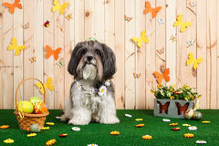 Studio shot of a cute dog in vibrant Spring Easter scene royalty free stock image