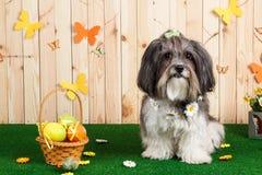 Studio shot of a cute dog in vibrant Spring Easter scene stock photo