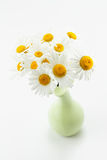 Studio shot of daisy flowers Stock Photo