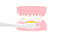 Studio shot of a dentures made out of plaster cast and tooth bru Stock Photography