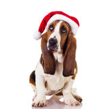 A studio shot of a dog wearing a christmas hat stock photo