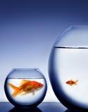 Studio shot of a fish in bowl Stock Image