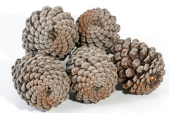Studio Shot of Five Stacked Old  Pine Cones Stock Images