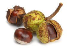 Studio shot of four chestnuts. As they look in nature stock photo