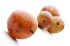 Studio shot of gooseberry on white background Stock Images