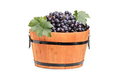 Studio shot of grapes in a wooden barrel Stock Photo