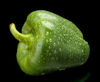 Studio shot of green bell pepper isolated on black with water dr Royalty Free Stock Images