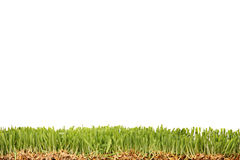 Studio shot of a green grass Royalty Free Stock Photography
