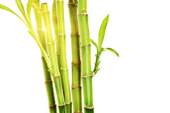 Studio shot of green stalks of bamboo with leaves Stock Photos