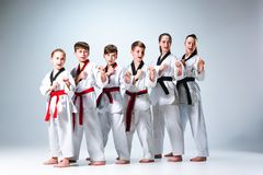 The studio shot of group of kids training karate martial arts royalty free stock images