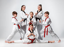 The studio shot of group of kids training karate martial arts. On gray backlground royalty free stock photography