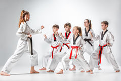 The studio shot of group of kids training karate martial arts. On gray backlground Stock Photo