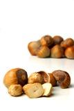 Studio shot of hazlenuts on white background Royalty Free Stock Images
