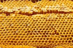Studio shot of organic honey in a honey-comb - healthy food concept. Studio shot of organic honey in an authentic honey-comb - healthy food concept Stock Photography