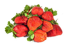 Studio Shot of Pile of Eight  Fresh Organic Red Strawberries Royalty Free Stock Photography