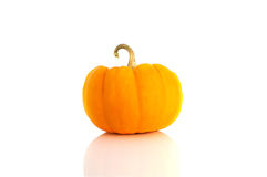 Studio shot of pumpkin on pure white background Stock Images