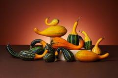 Studio shot of pumpkins Stock Image