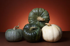 Studio shot of pumpkins Stock Image