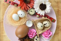 Studio shot of quail eggs and object on dish.  stock photo